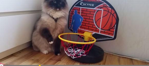 Η γάτα που βάζει καλάθια (βίντεο)