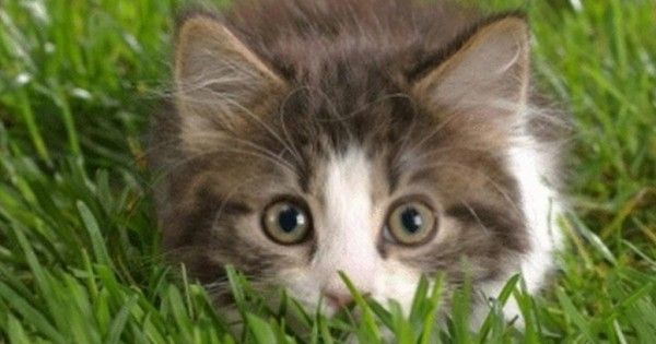 Έχετε σκοπό να υιοθετήσετε γάτα; Πρώτα πρέπει να δείτε αυτό το βίντεο!