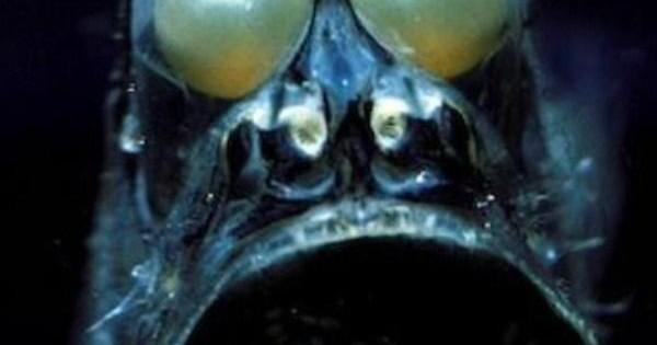 Αυτό είναι το πιο τρομακτικό ψάρι στον κόσμο (pics)