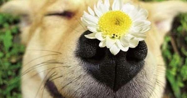 Από ποια λουλούδια κινδυνεύουν τα κατοικίδιά μας