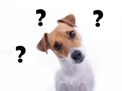 Οι σκύλοι είναι εξυπνότεροι από ότι νομίζαμε!
