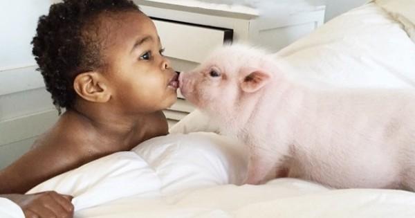 Η απίστευτη φιλία ανάμεσα στο 2χρονο κοριτσάκι και στο 3 μηνών γουρουνάκι του (εικόνες)