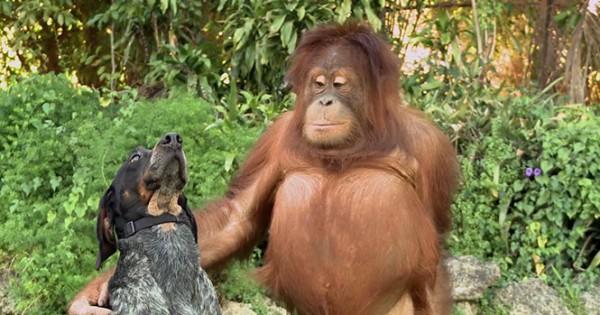 Η νέα διαφήμιση της Google με ασυνήθιστες φιλίες ζώων θα σας κάνει να λιώσετε (Video)