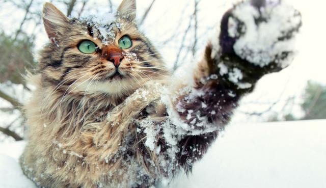 πρόβλεψη καιρός Γάτα