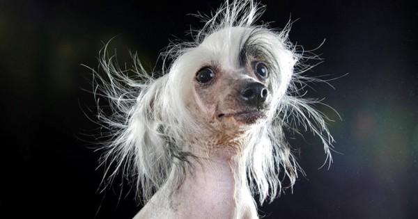Τα πιο «άσχημα σκυλιά» είναι τελικά πολύ όμορφα [photos]