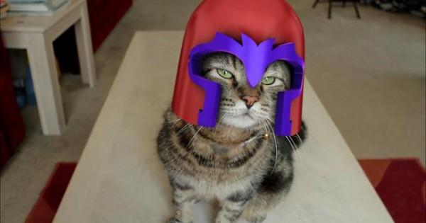 Τι σχέση έχει η γάτα στο βίντεο με τους X-MEN;