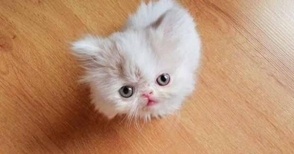 ΜΑΓΕΥΤΙΚΟ: Δείτε τις… περιπέτειες αυτής της μικροσκοπικής γάτας! (PHOTOS)