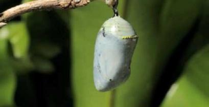 Η γέννηση μιας πεταλούδας σε ένα εντυπωσιακό timelapse βίντεο