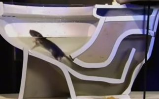 Εντυπωσιακό: Δείτε πώς τρυπώνουν τα ποντίκια στο μπάνιο (βίντεο)