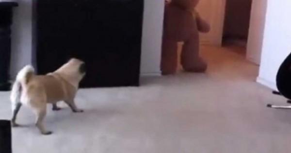 Πήγε να τρομάξει τον σκύλο του και έγινε κάτι που… δεν το περίμενε! (βίντεο)
