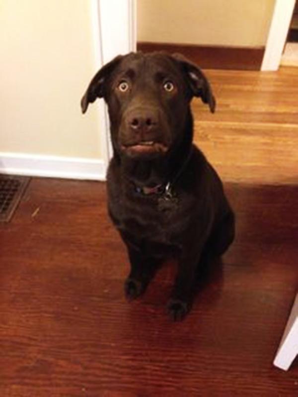 Σκύλος κτηνίατρος