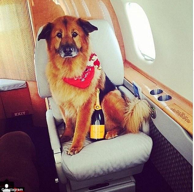 Σκύλος πλούσιος