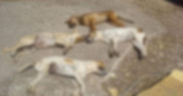 Kρήτη: 50 δηλητηριάσεις ζώων με φόλες μόνο την περασμένη εβδομάδα! (vid)