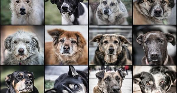 Τα πιο γνωστά αδέσποτα σκυλιά της Αθήνας!