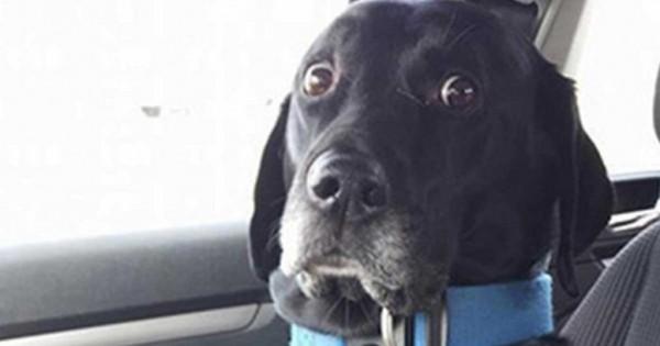 15 αξιολάτρευτες φωτογραφίες με σκυλάκια που συνειδητοποίησαν ότι πάνε στον κτηνίατρο!