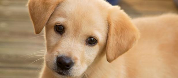 Σκύλος όνομα σκύλου