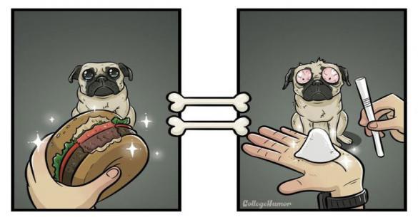 Δείτε πως μοιάζει ο κόσμος με τα μάτια ενός σκύλου (εικόνες)