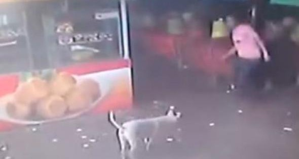 Πήγε να κλωτσήσει αδέσποτο σκύλο και τιμωρήθηκε όπως του άξιζε (βίντεο)