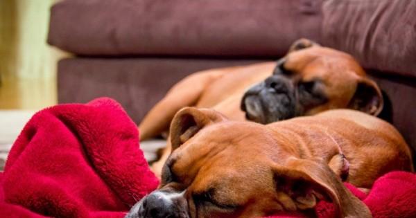 Οι σκύλοι ονειρεύονται! Τι βλέπουν στον ύπνο τους;