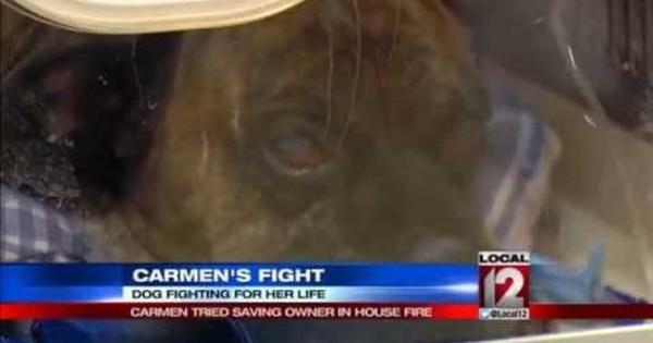 Σκύλος-ήρωας παραλίγο να καεί ζωντανός για να σώσει το αφεντικό του (βίντεο)