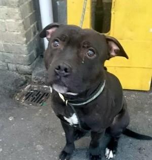 Τα δάκρυα ενός σκυλάκου: Εγκαταλελειμμένος και δεμένος σε σιδηροδρομικό σταθμό (σπαρακτική εικόνα)
