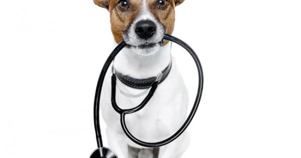 Είναι ο σκύλος σας υγιής;