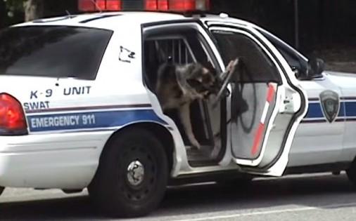 Πανέξυπνος σκύλος ανοίγει και κλείνει μόνος του την πόρτα περιπολικού!