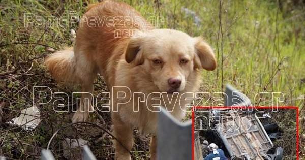 Μοναδικό περιστατικό σε τροχαίο στην Πρέβεζα: Σκύλος που ήταν στο αμάξι βοήθησε να σωθεί το αφεντικό του και ύστερα έτρεξε πίσω από το ασθενοφόρο! (εικόνες)