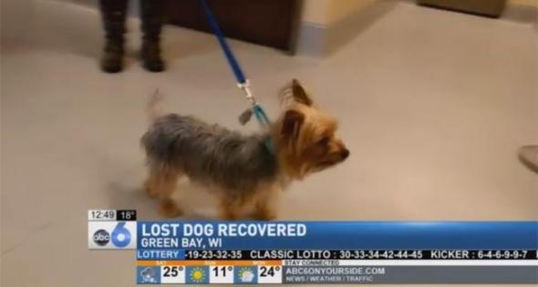 Σκυλάκι βρέθηκε 2.896 χιλιόμετρα μακριά από το σπίτι του (βίντεο)