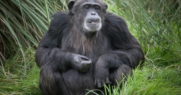 Τα εξυπνότερα ζώα του πλανήτη!