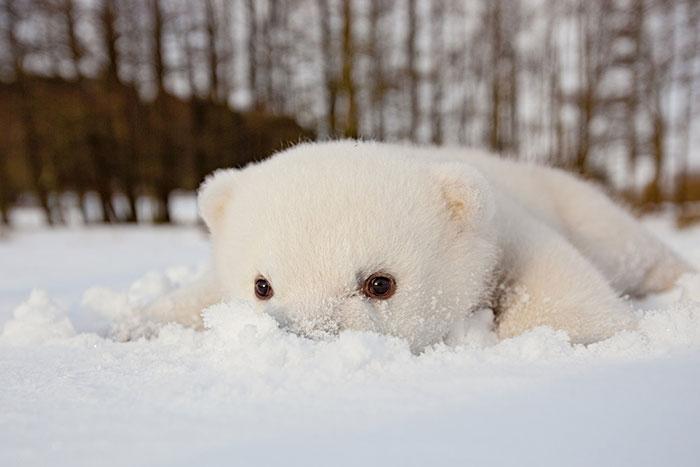 χιόνι φωτογραφίες ζώα