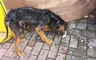 Βρέθηκε σκελετωμένος σκύλος στην Ξάνθη – Τον ανέλαβαν φιλόζωοι