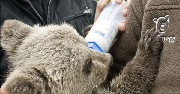 Ταξιδέψτε με τα παιδιά σας στον Αρκτούρο τώρα που ξυπνούν οι αρκούδες