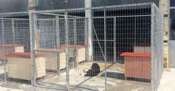 Καταφύγιο Αδέσποτων Ζώων στην Άρτα
