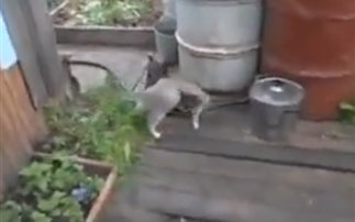 Και όμως γάτα και σκύλος μπορούν να γίνουν οι καλύτεροι φίλοι (βίντεο)