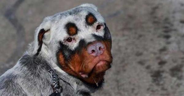 33 μοναδικοί σκύλοι που θα λατρέψετε αμέσως (εικόνες)