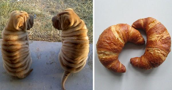 Ξεκαρδιστικές φωτογραφίες: Σκυλιά που μοιάζουν με… κάτι άλλο!