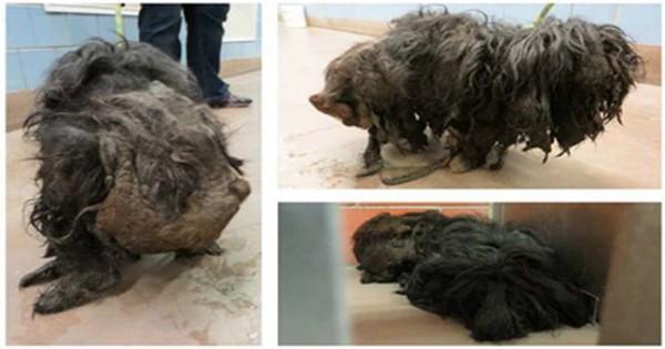 Η απίστευτη μεταμόρφωση ενός σκύλου! (εικόνες)