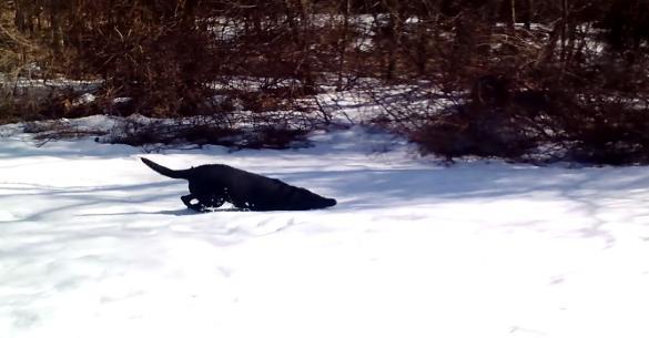Βγήκαν έξω και είδαν τον σκύλο τους να κάνει… (βίντεο)