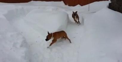 Όταν ο μεγάλος σκύλος τρολάρει τον μικρό (βίντεο)