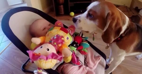 Ο σκύλος κλέβει το παιχνίδι ενός μωρού και ζητά συγγνώμη με έναν ξεκαρδιστικό τρόπο (βίντεο)