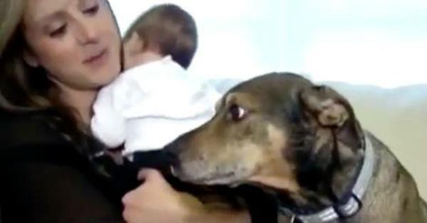 Ο σκύλος αυτός είδε κάτι περίεργο με το μωρό του ιδιοκτήτη του και αυτό που έκανε θα σας αφήσει άφωνους (βίντεο)