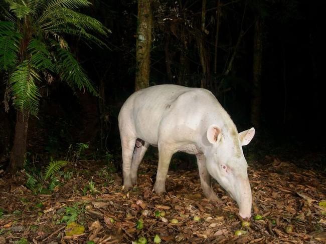 ζώα Εικόνες γενετικές μεταλλάξεις