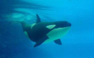 Και οι φάλαινες περνούν από εμμηνόπαυση