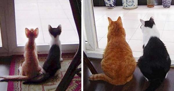 Πριν και μετά: 15 γατάκια που μεγάλωσαν και έγιναν γάτες