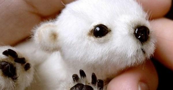 32 πανέμορφα μικρά ζώα που θα σας φτιάξουν την ημέρα (εικόνες)