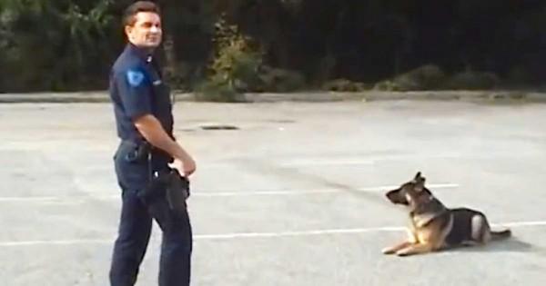 Όλοι εντυπωσιάστηκαν με αυτό που έκανε ένας εκπαιδευμένος σκύλος της αστυνομίας! (βίντεο)