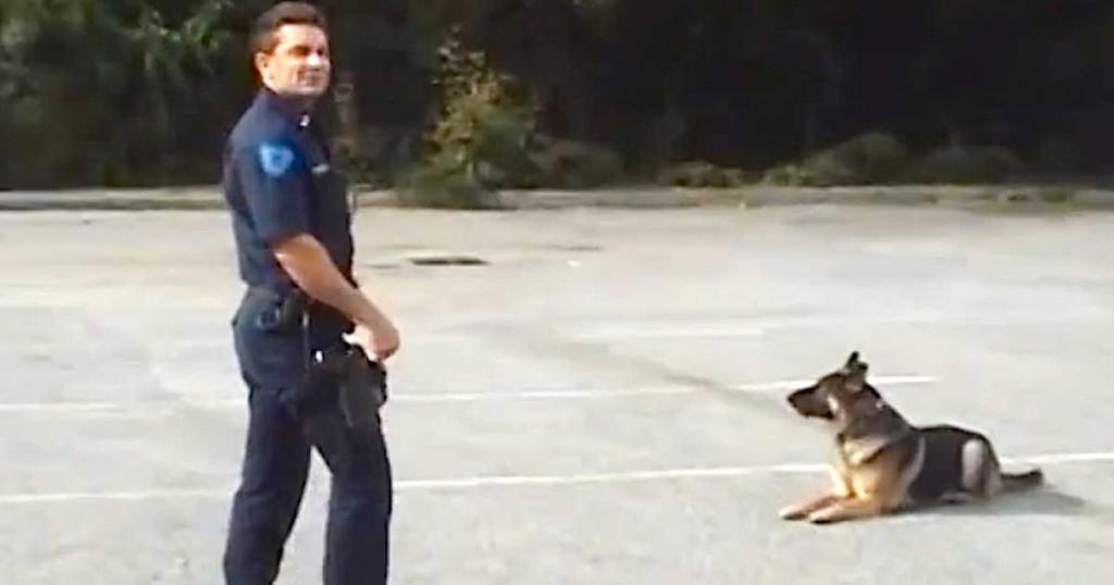 Σκύλος αστυνομία