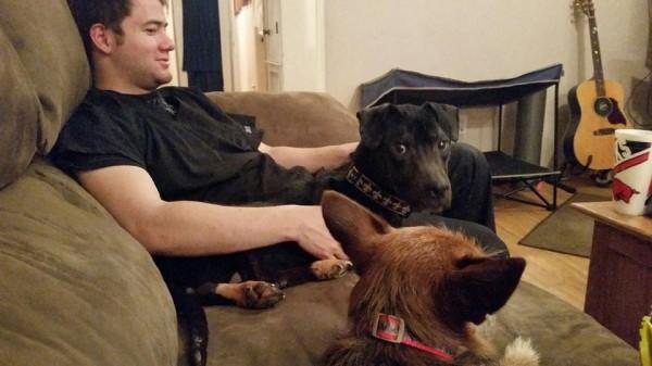 Σκύλος κλουβί