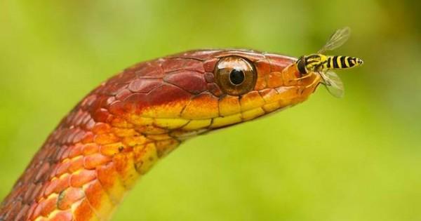 Τα 21 πιο όμορφα φίδια του πλανήτη μας